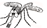 The Mosquito Dines Out - Nobo - Copy